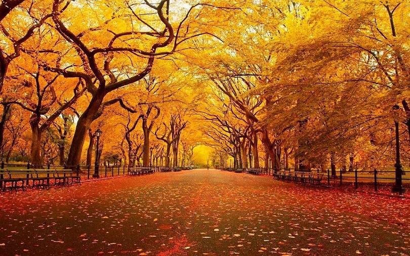 黄色树林高清壁下载